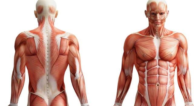 nauka Pytanie-Ciekawostka: Na której części ludzkiego ciała pojawiają się zajady?