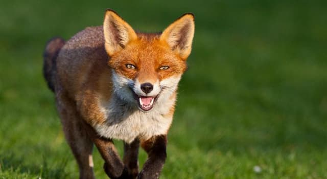 natura Pytanie-Ciekawostka: Najrzadsze zwierzę Ameryki Północnej.