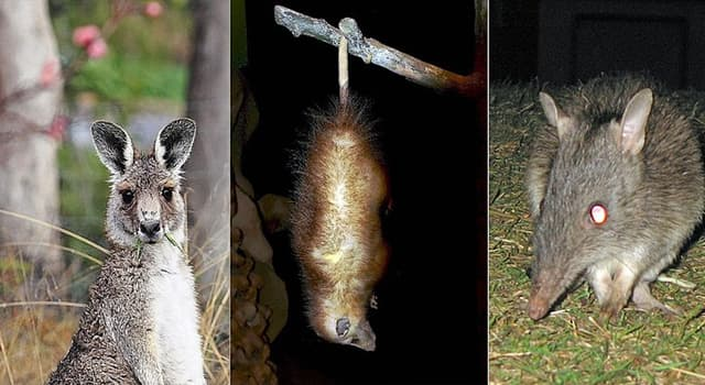 Nature Trivia Question: What is the distinctive characteristic common to Marsupials?