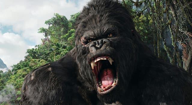 """Film & Fernsehen Wissensfrage: Vom wem wurde die Rolle von Ann Darrow in den Filmen """"King Kong"""" gespielt?"""