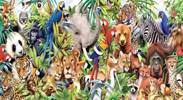 Nature Trivia Question: Which of the following animals is not retromingent?