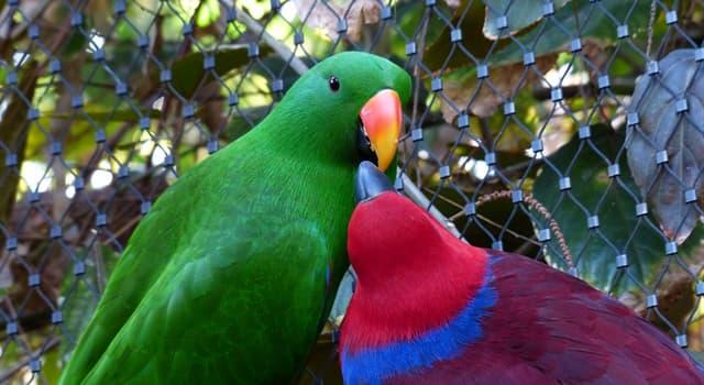 Naturaleza Pregunta Trivia: ¿Cuál de los siguientes aves tiene una larga cola, incluso más larga que su cuerpo?