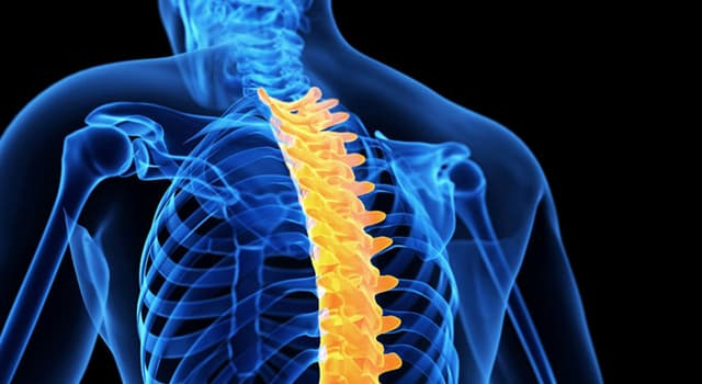 Science Trivia Question: Which of these is a surgical technique used to join two or more vertebrae?