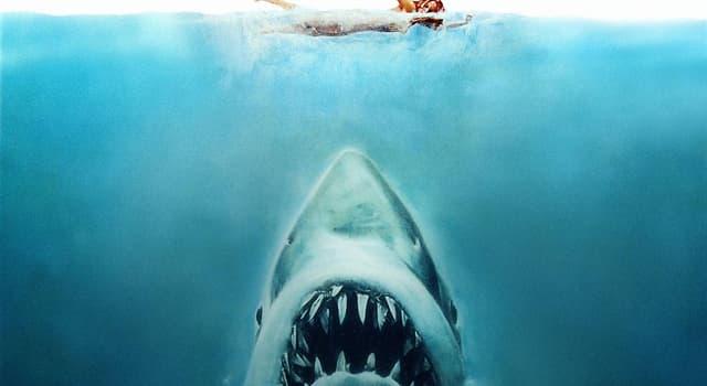 """Film & Fernsehen Wissensfrage: Wie heißt der Badeort im Film """"Der weiße Hai"""" (1975)"""