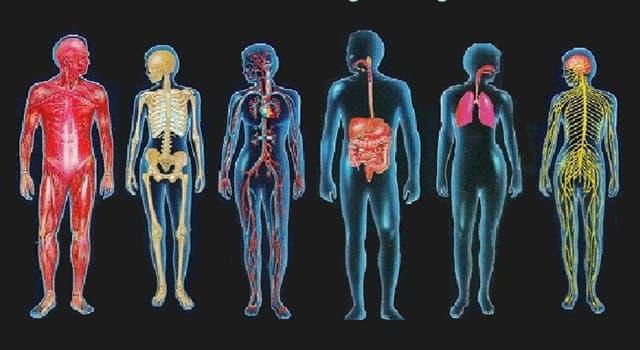 Wissenschaft Wissensfrage: Wo im menschlichen Körper befinden sich die Merkel-Zellen?