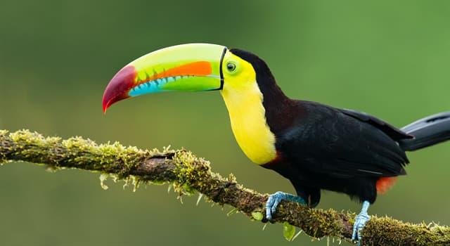 Natur Wissensfrage: Auf welchem Kontinent lebt der Vogel Tukan?