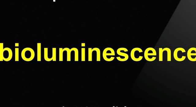 Наука Запитання-цікавинка: Що таке біолюмінесценція?