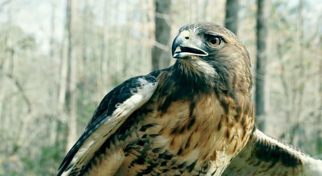 natura Pytanie-Ciekawostka: Co to za ptak na obrazku?