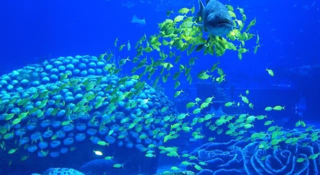 społeczeństwo Pytanie-Ciekawostka: Co według księgi rekordów Guinessa jest największym akwarium świata?