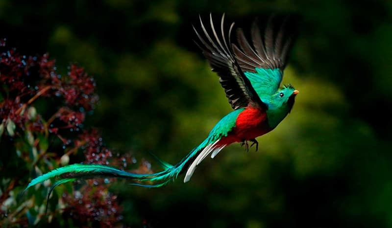 Naturaleza Pregunta Trivia: ¿Cómo se llama el ave que aparece en la imagen?