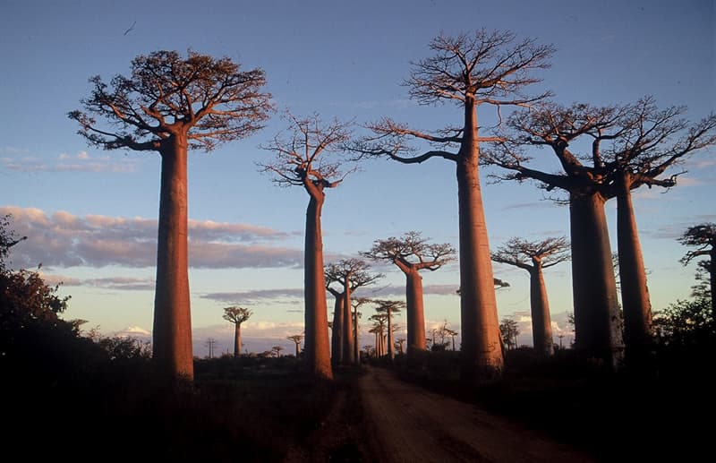 Cultura Pregunta Trivia: ¿Cuál es el gentilicio de la persona oriunda de Madagascar?
