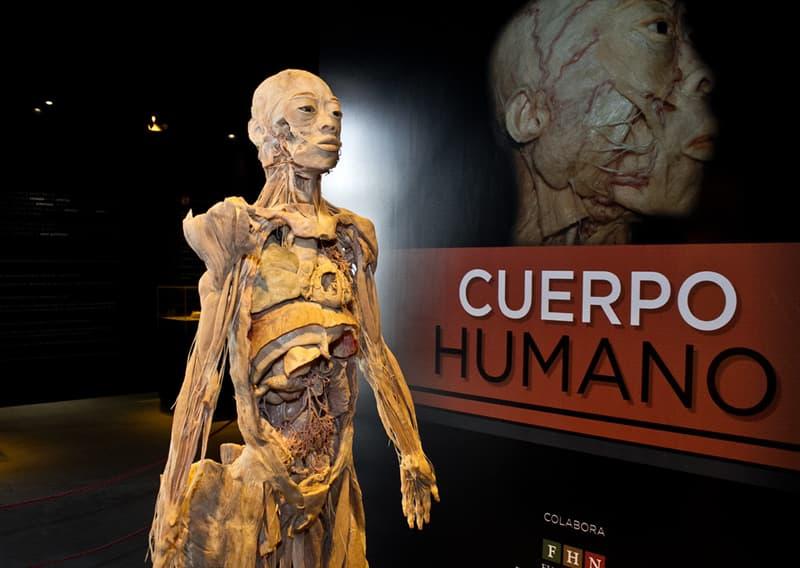 Сiencia Pregunta Trivia: ¿Cuál es el tendón más fuerte del cuerpo humano?