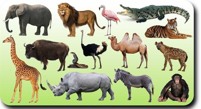Natur Wissensfrage: Das Mastodon ist ein früher Verwandter von welchem modernen Säugetier?