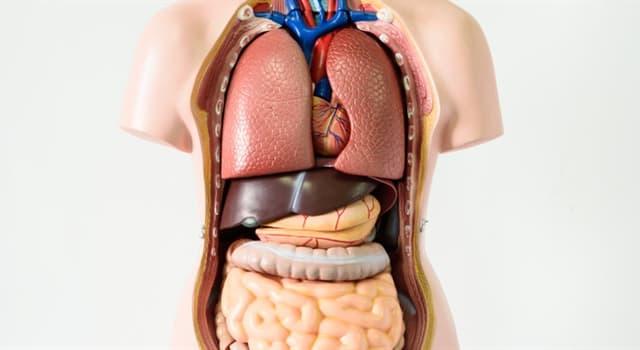 Wissenschaft Wissensfrage: Der Frontallappen befindet sich in welchem Teil des menschlichen Körpers?
