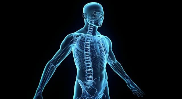 Wissenschaft Wissensfrage: Der menschliche Körper enthält wie viele mandibulare Knochen?