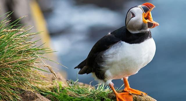 Natur Wissensfrage: Der Vertreter welcher Vogelart ist auf dem Foto dargestellt?