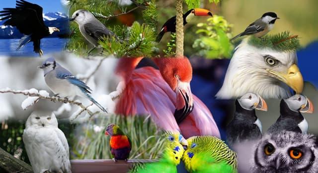 natura Pytanie-Ciekawostka: Do jakiego gatunku należy najstarszy potwierdzony dziki ptak na świecie?