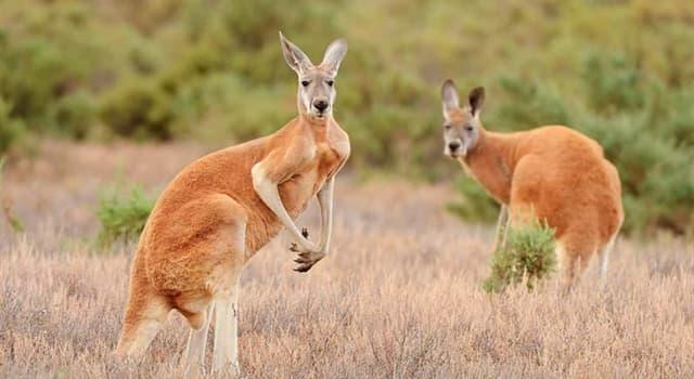 Geografia Pytanie-Ciekawostka: Flagę którego państwa można dostrzec na fladze Australii?