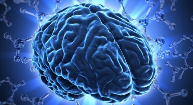 nauka Pytanie-Ciekawostka: Gdzie w mózgu człowieka znajduje się ośrodek wzroku?