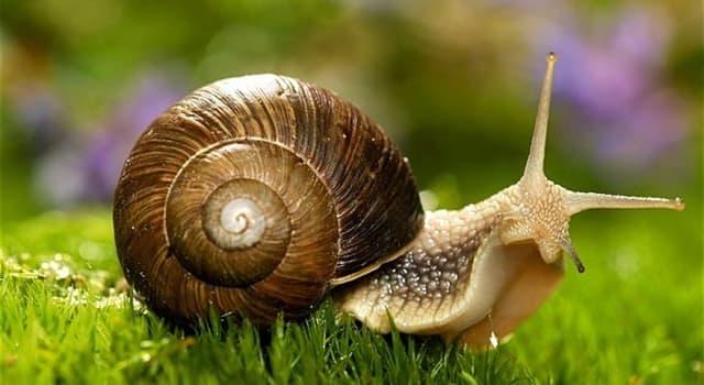 natura Pytanie-Ciekawostka: Jak długo mogą spać ślimaki?