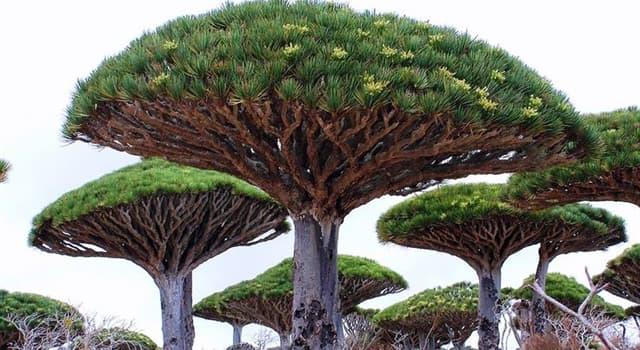 natura Pytanie-Ciekawostka: Jak nazywa się drzewo na zdjęciu?