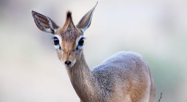 natura Pytanie-Ciekawostka: Jak nazywa się to zwierzę?