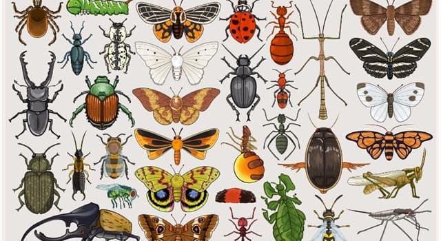 natura Pytanie-Ciekawostka: Jaki gatunek owadów udają własną śmierć, aby uniknąć kopulacji?