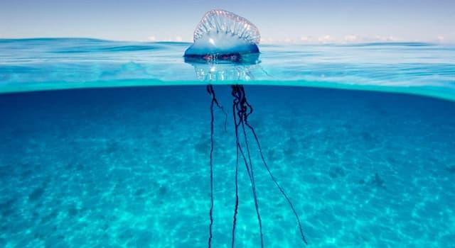 natura Pytanie-Ciekawostka: Jaki morski parzydełkowiec jest pokazany na obrazku?