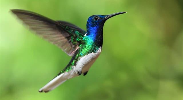 natura Pytanie-Ciekawostka: Jaki ptak jest na zdjęciu?
