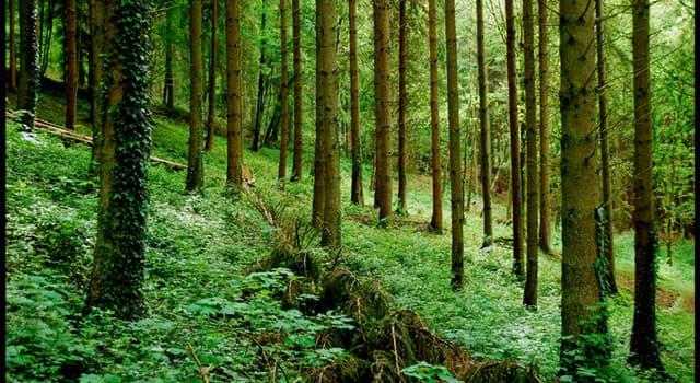natura Pytanie-Ciekawostka: Jaki rodzaj lasu nazywano mglistym?
