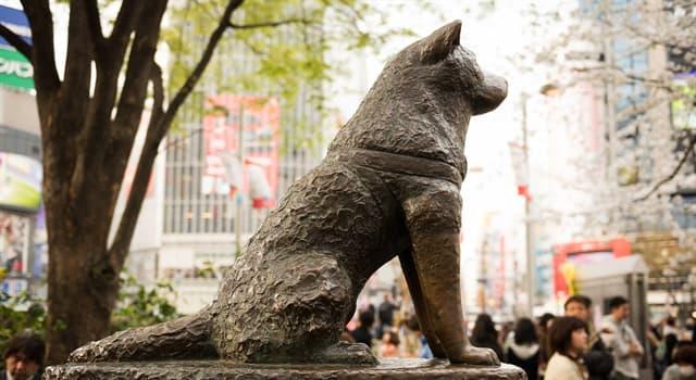 Історія Запитання-цікавинка: Як звали пса породи акіта-іну, що є символом вірності і відданості в Японії?
