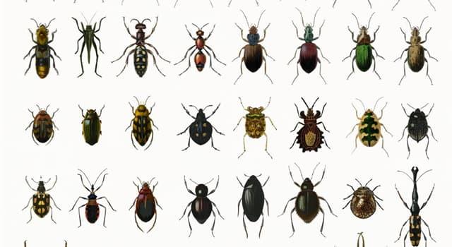 природа Запитання-цікавинка: Які комахи живуть в Формікаріі?