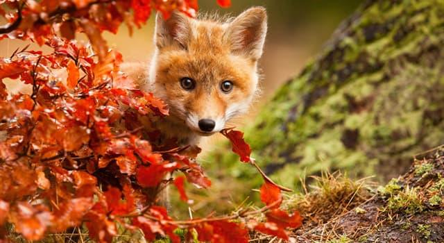 природа Запитання-цікавинка: Яка тварина зображено на дорожньому знаку «Дикі тварини»?