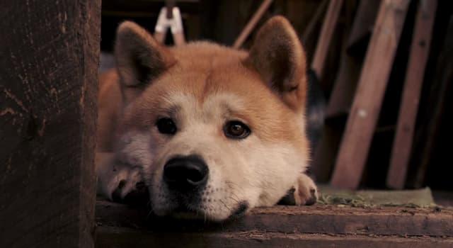 Фільми та серіали Запитання-цікавинка: Який актор зіграв професора університету Паркера Вілсона в мелодрамі «Хатіко: найвірніший друг»?