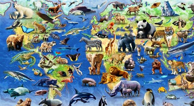 природа Запитання-цікавинка: Деркач є представником якого виду тварини?