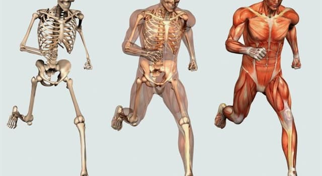 nauka Pytanie-Ciekawostka: Która kość ludzkiego ciała jest najmocniejszą?