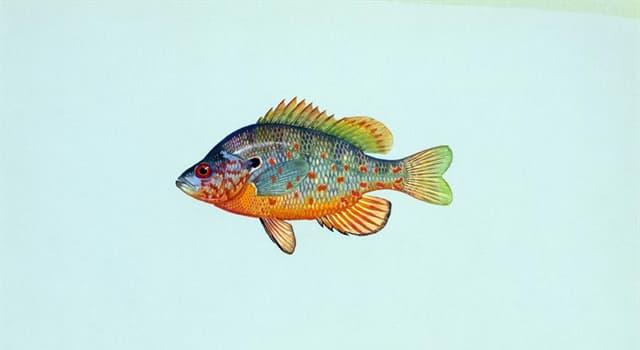 natura Pytanie-Ciekawostka: Która z tych ryb jest jadowitą?