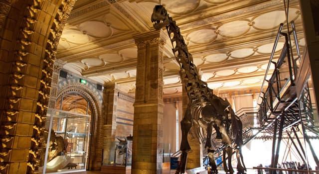 nauka Pytanie-Ciekawostka: Które muzeum londyńskie ma galerię dinozaurów?
