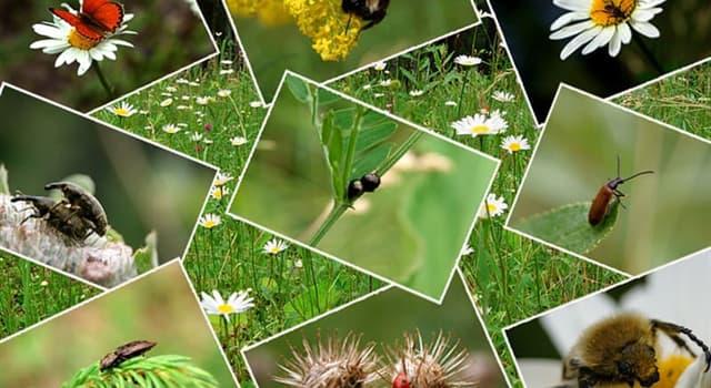 natura Pytanie-Ciekawostka: Które owady mają uszy na odwłokach?