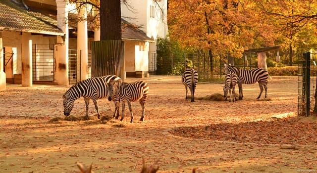 natura Pytanie-Ciekawostka: Które zoo prezentuje jedną z najbardziej wszechstronnych kolekcji gatunków na świecie?