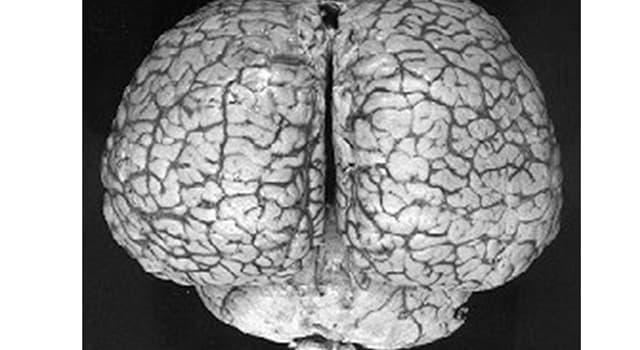 natura Pytanie-Ciekawostka: Które zwierzę ma największy mózg na Ziemi?