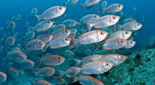 natura Pytanie-Ciekawostka: Który gatunek ryby jest najbardziej jadowity na świecie?
