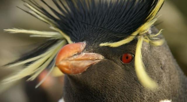 natura Pytanie-Ciekawostka: Który nielotny ptak jest najszybszym?