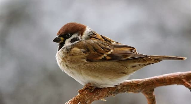 natura Pytanie-Ciekawostka: Który ptak nie wydaje dźwięków podczas lotu?