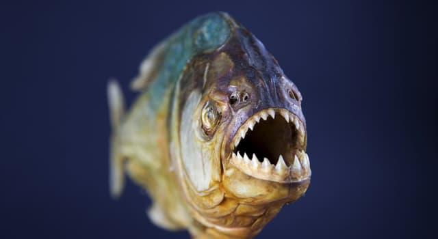 natura Pytanie-Ciekawostka: Który z tych gatunków nie ma zębów na górnej szczęce?