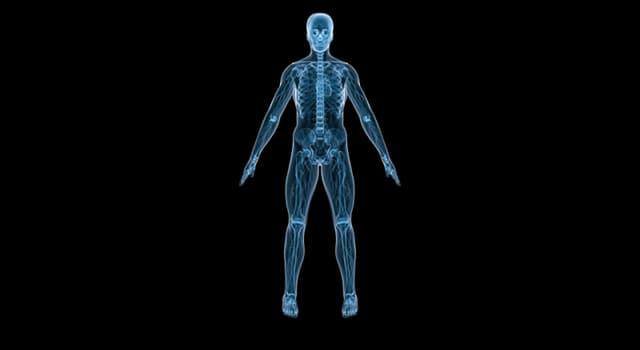nauka Pytanie-Ciekawostka: Na jakie zmiany w ludzkim ciele reagują baroreceptory?
