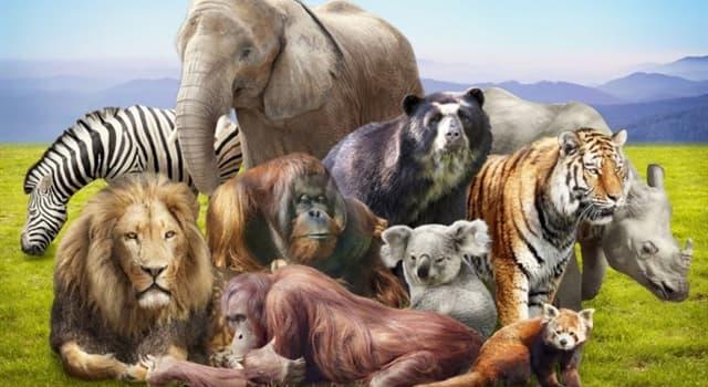природа Запитання-цікавинка: Вівчарик-Ковалик - це що за тварина?
