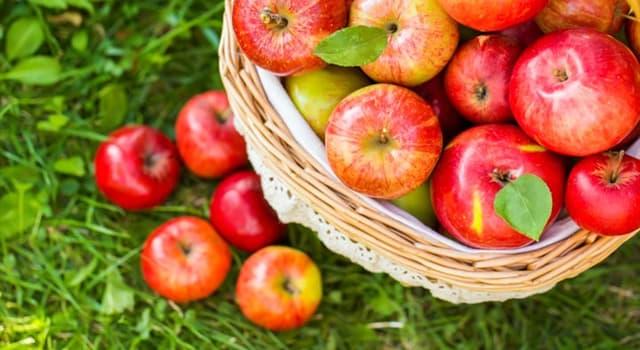 natura Pytanie-Ciekawostka: Skąd pochodzi jabłko?