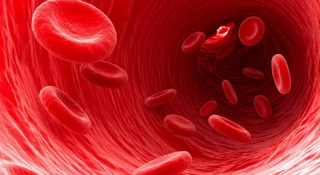 Наука Запитання-цікавинка: Скільки компонентів кровотворної системи є основними?