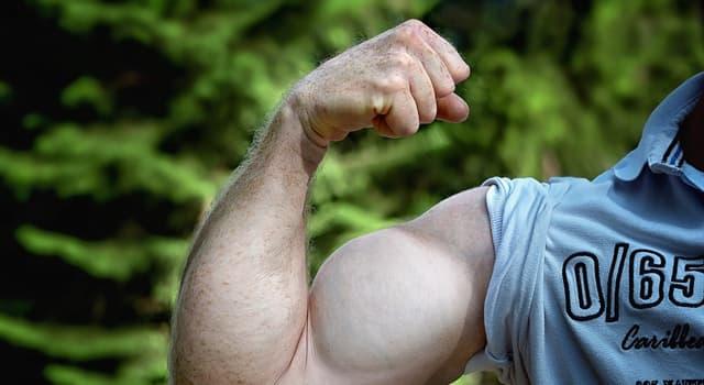 nauka Pytanie-Ciekawostka: W której części ciała znajduje się mięsień deltoidalny?
